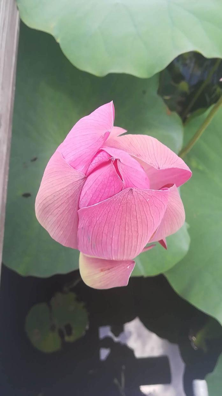 写真売ります 季節のお花の写真です。こちらは三枚セットです。