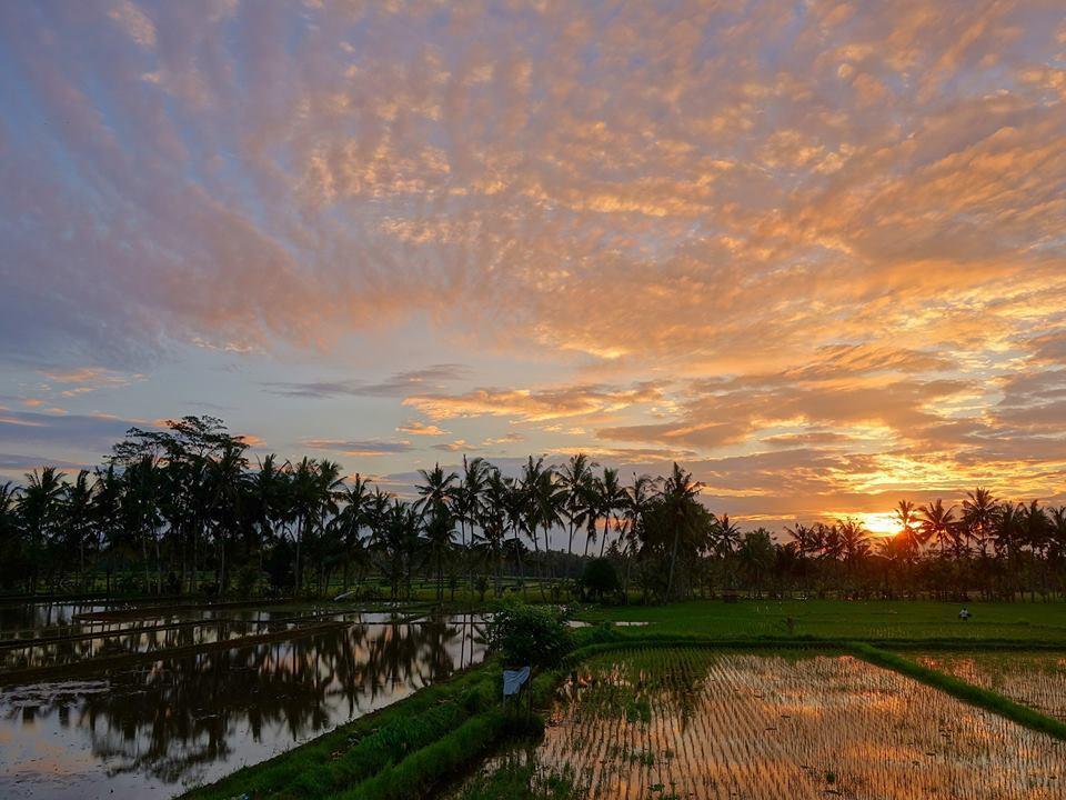 バリ島の朝の風景写真を売ります パワースポット【ゴアガジャ】近くの田園風景の朝をお届け