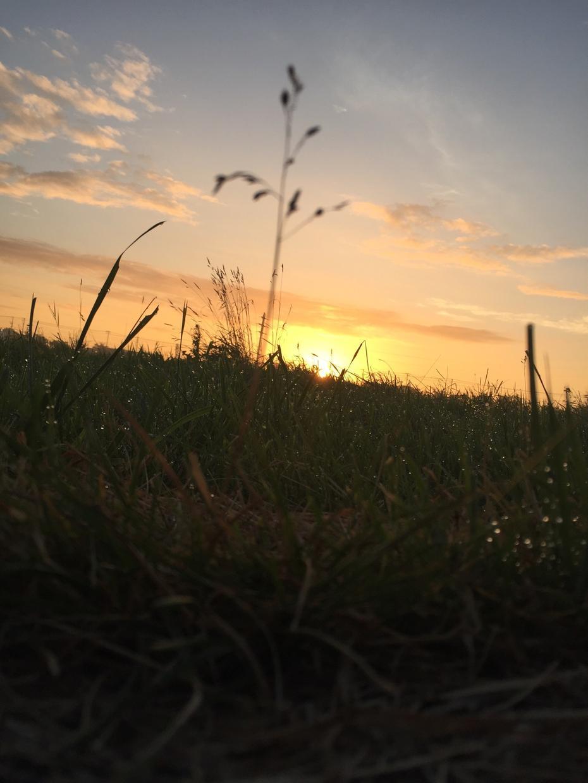 草木や花、空などの風景写真を提供します iPhoneで撮影!絵になる写真を撮ります。