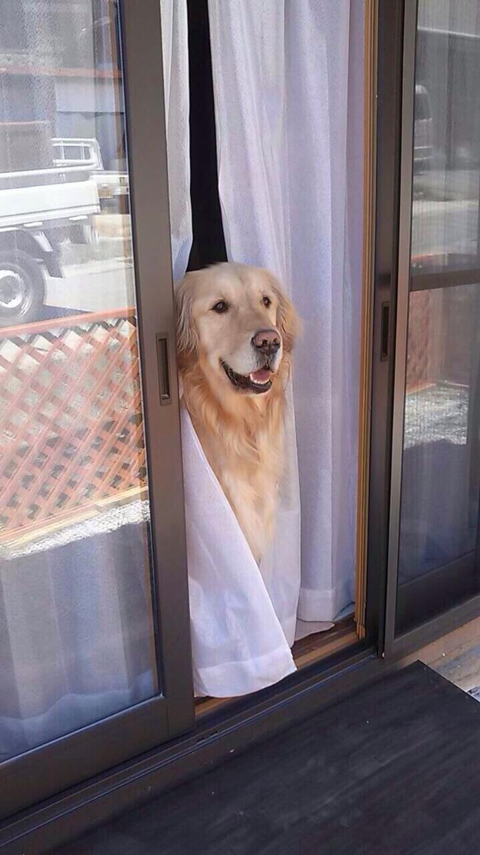笑顔を欲してるあなたへ犬の写真をプレゼントします! イメージ1