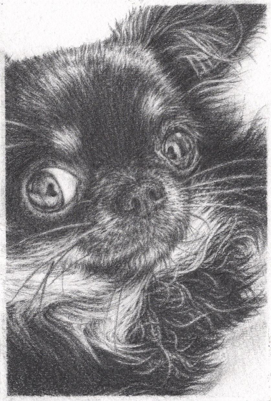 ペットの鉛筆画を描きます ペットとの思い出を残しませんか イメージ1