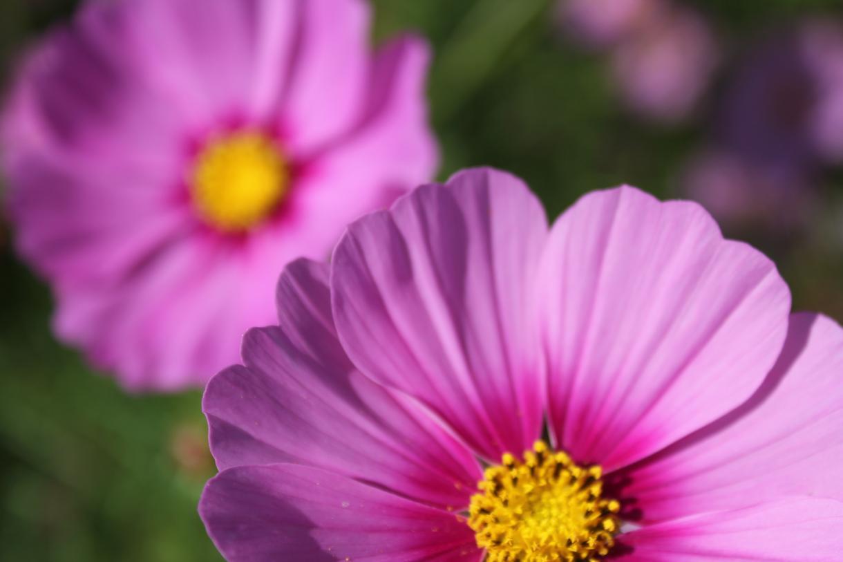 花の写真撮ります ✿✿✿✿✿✿✿✿✿✿✿✿✿✿✿✿