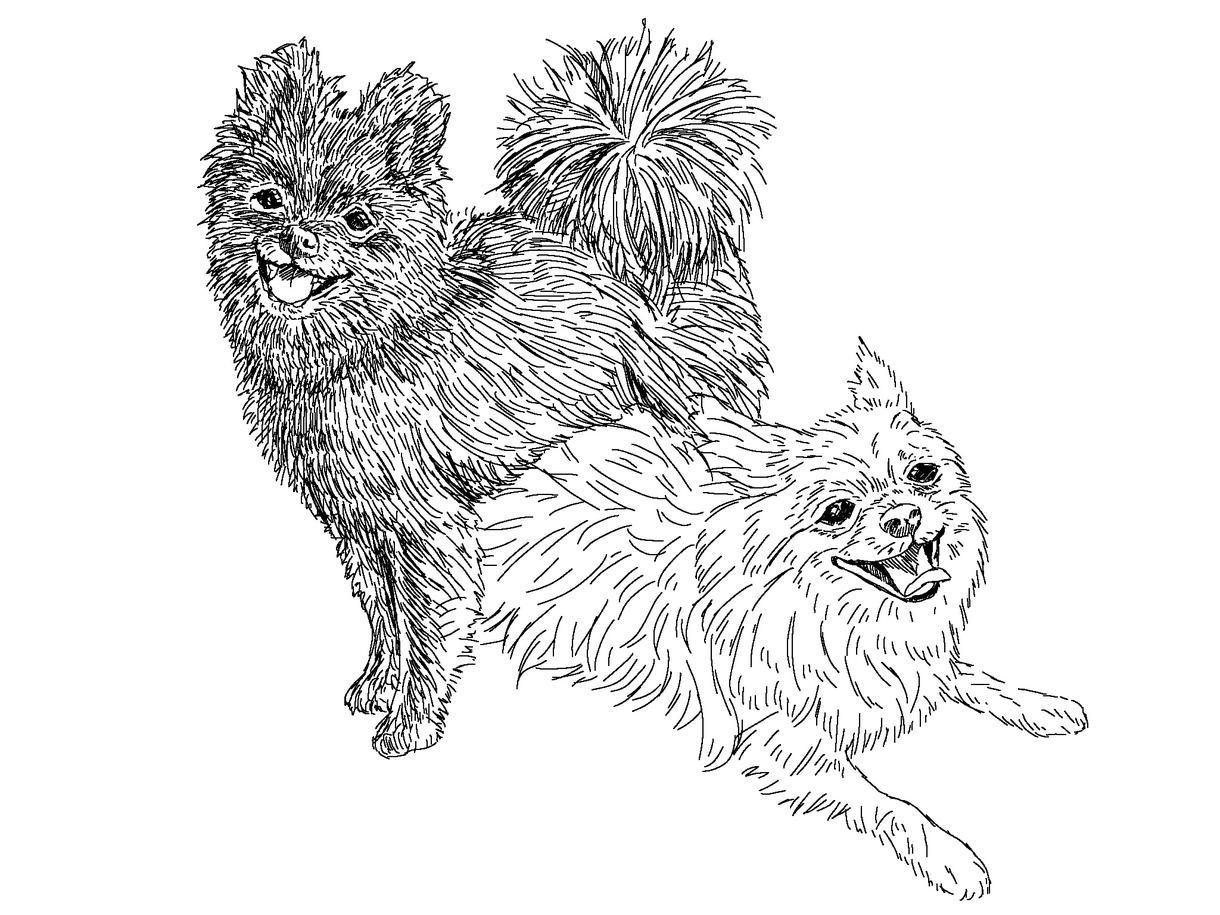 どんな動物でも!可愛いペットをイラストにします 年賀状やSNSのアイコンなど!写真をもとに作成します!