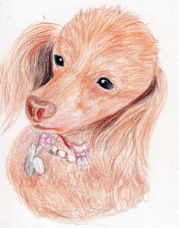人物やペットなど描きます ペットの誕生日や思い出に・・・。