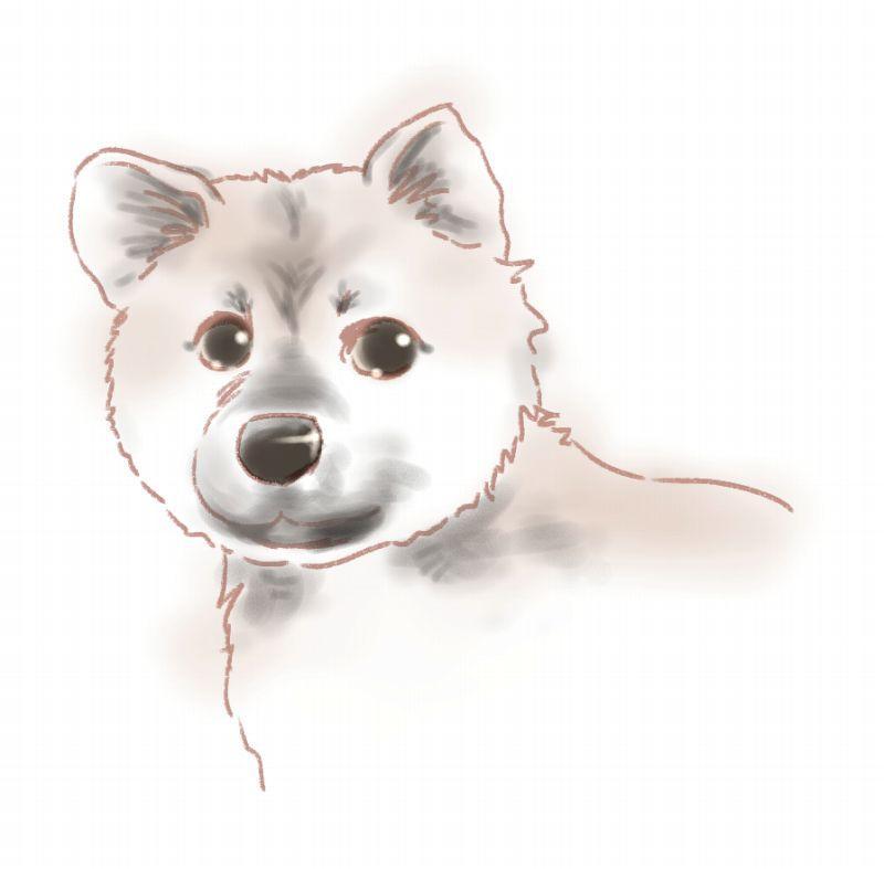 わんこさんのイラストお描きします 待ち受けや、色んなグッズにプリントアウト