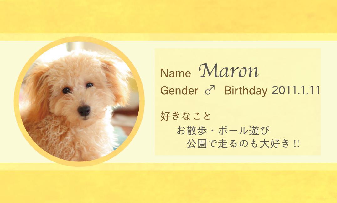 片面5,000円で家族の名刺デザイン制作します ワンちゃんネコちゃん以外の子も勿論大歓迎‼️