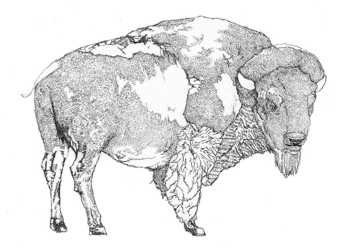 動物の細密画をお描きします プロのデザイナーが作成!個性的な物を求める方に