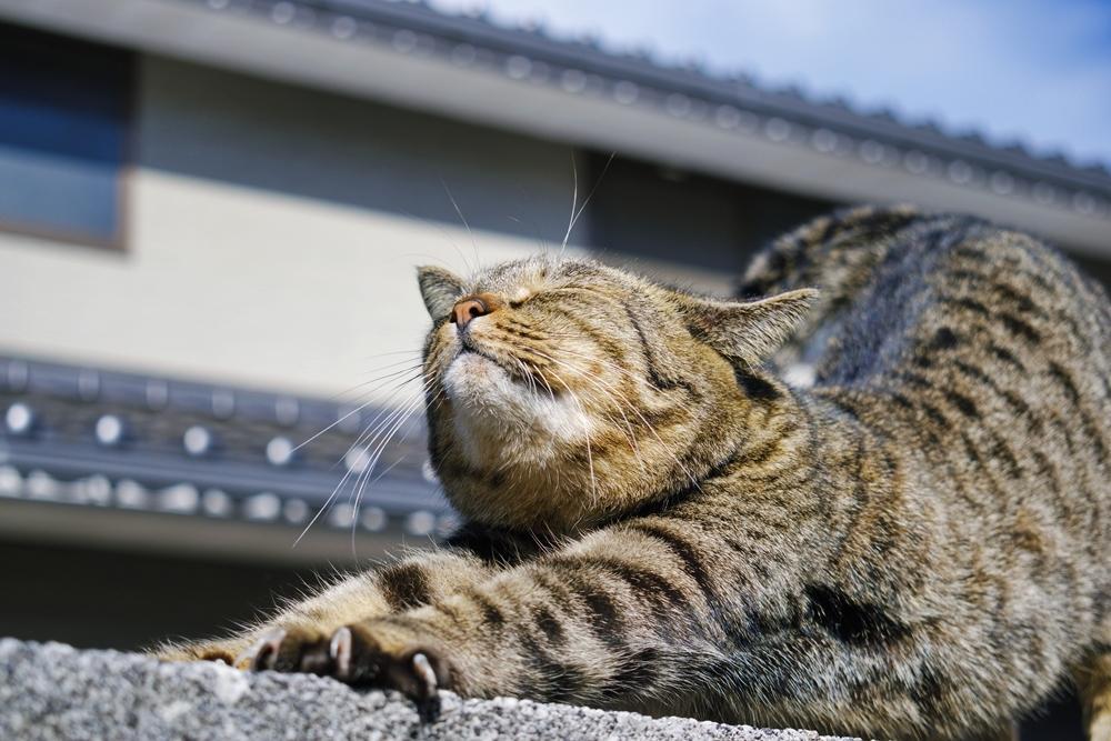 ねこフォトグラファーが出張撮影します 猫フォトコンテスト大賞受賞者が一眼レフで撮影致します。