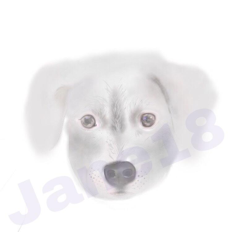 柔らかい雰囲気の絵描きます あなたの大切なペットをイラストにします☆