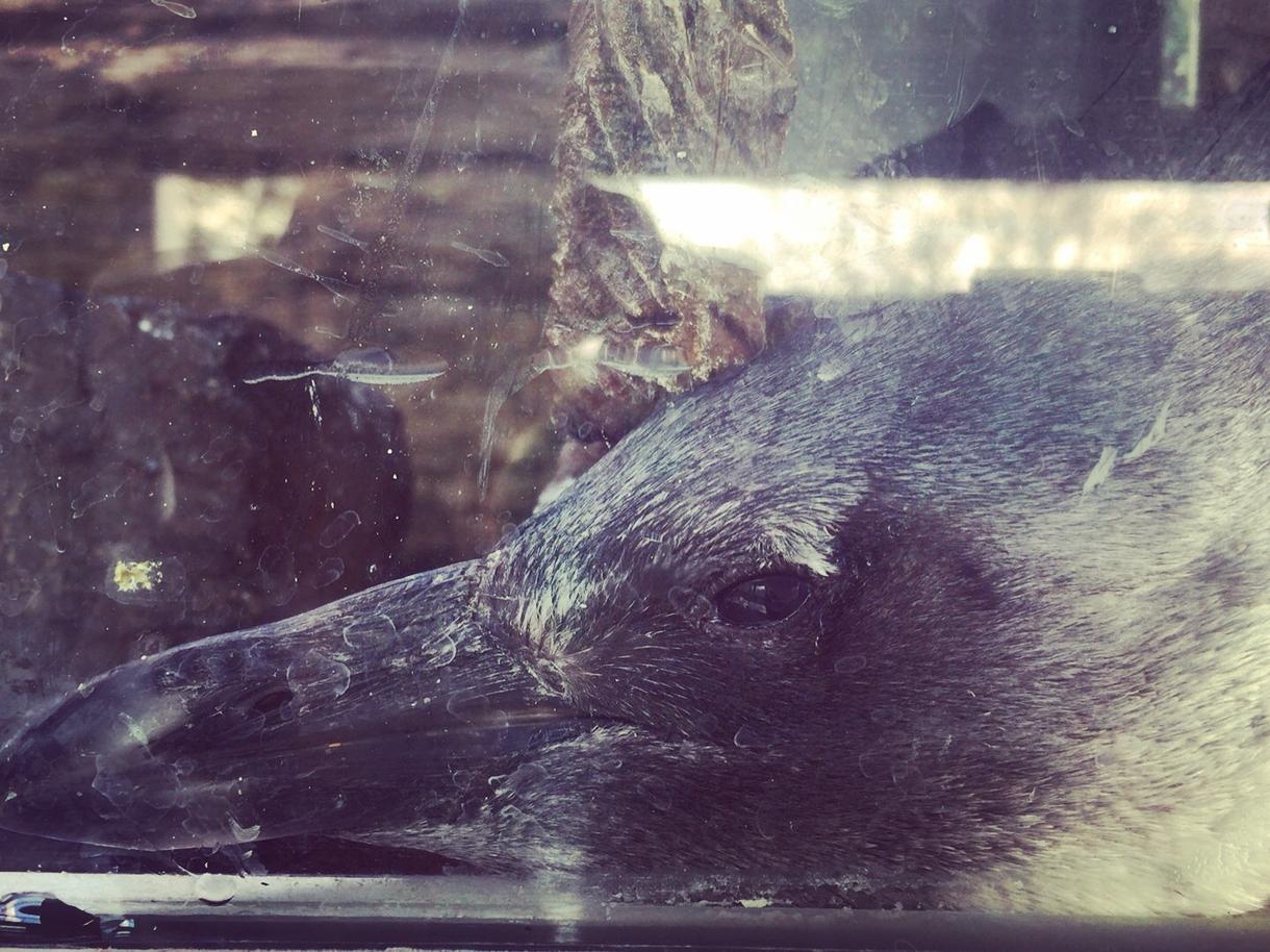 生き物の写真お売りします 自分で水族館や動物園を巡って撮ってきた写真を販売します!