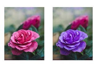 写真の色味の変更をします 画像の細かいところまで色を変えたい方へ