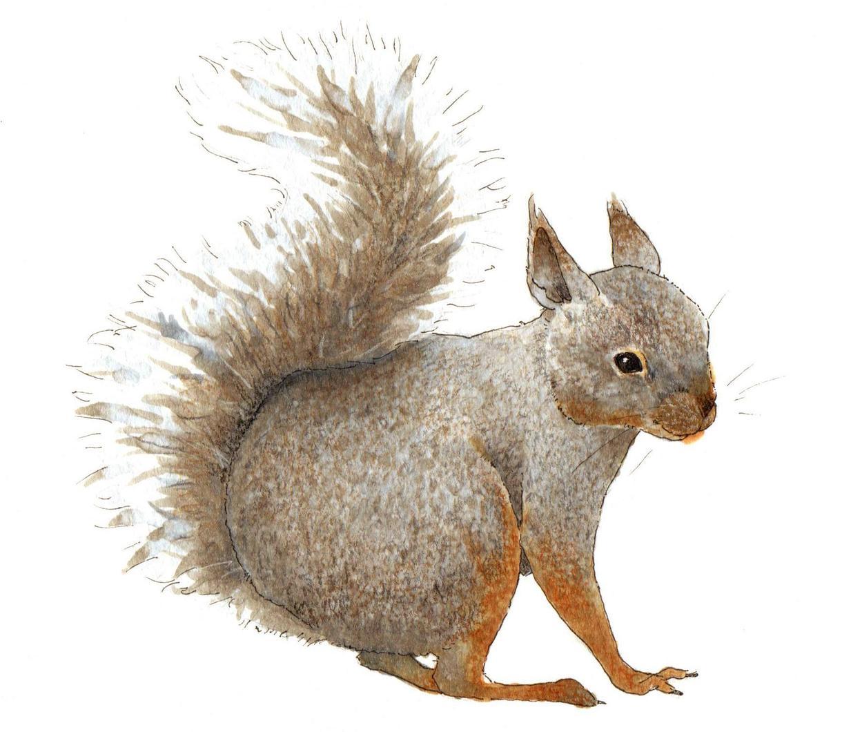 動物の手描きイラスト制作します 【SALE】温かいタッチでペットの似顔絵を描きます。 イメージ1