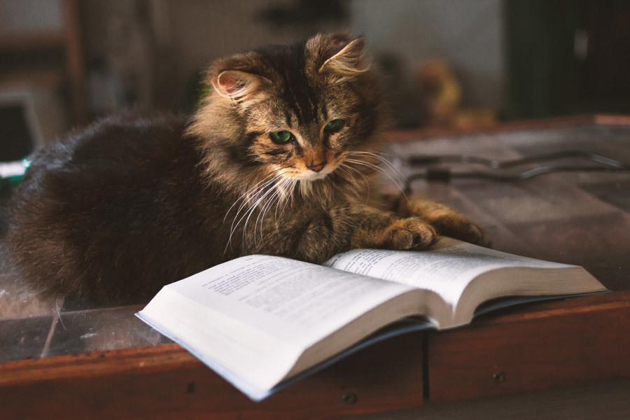あなたの気になる本や漫画を代わりに読んで伝えます 時間がなくて読めないけれど、内容を知りたいあなたへ。