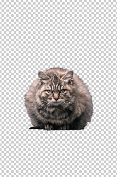 可愛いペットの写真などの画像切り抜きます 白黒透明化可能!ペットや人物、静物など可能です!