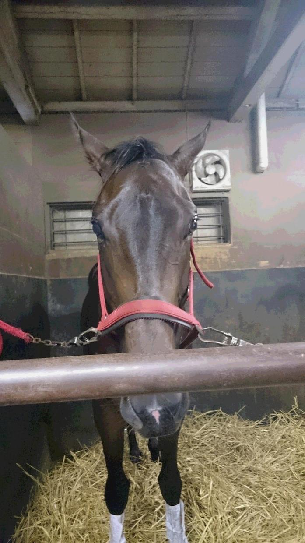 中央競馬・地方競馬 推奨穴馬教えます 競馬新聞等では探せないホンモノの穴馬で夢も利益も欲張ろう。