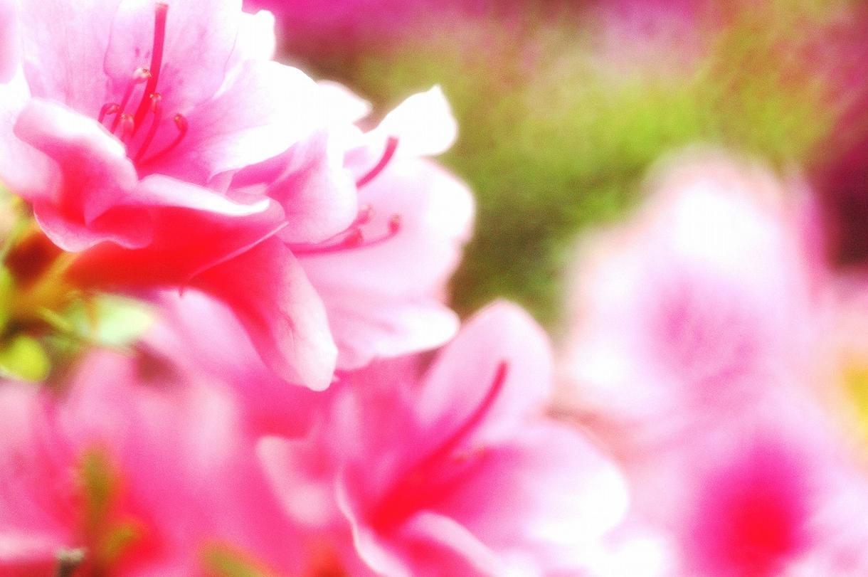 癒される写真素材10枚を500円で提供します 【花の精霊】テーマでポスター、バナー用に文字入れします