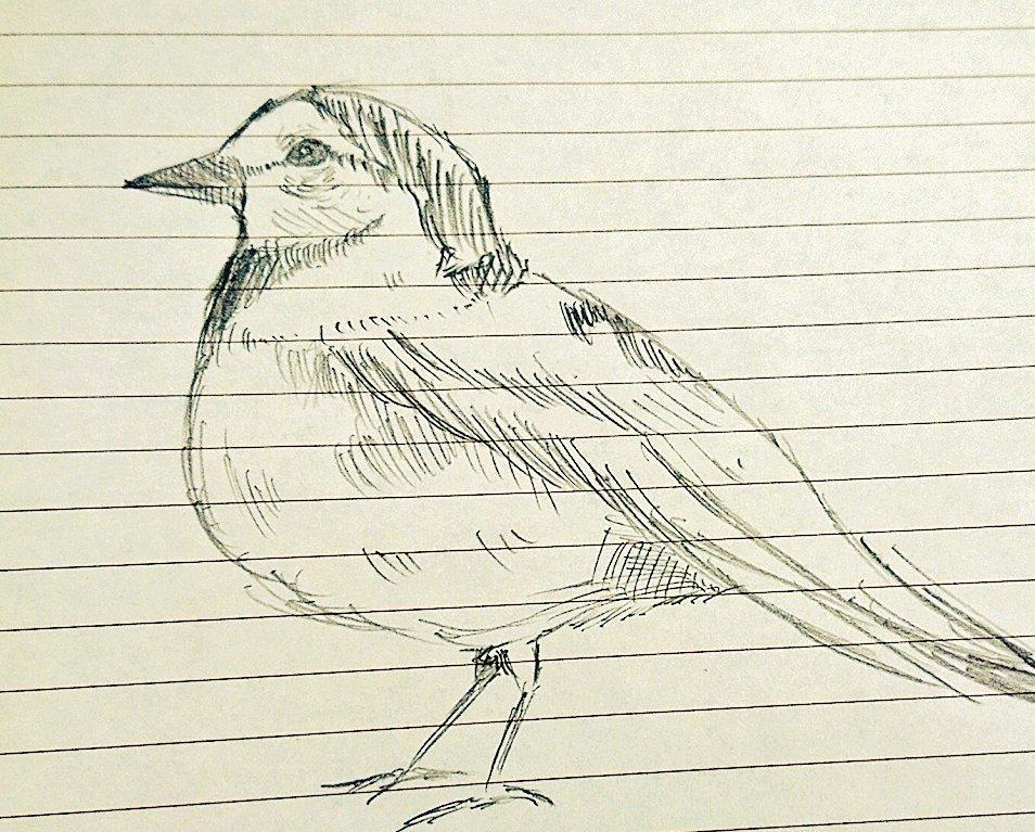 ペットなどのお写真をお借りしてご希望の鳥を描きます 小鳥を描くのが得意です。厚塗りで描きます。