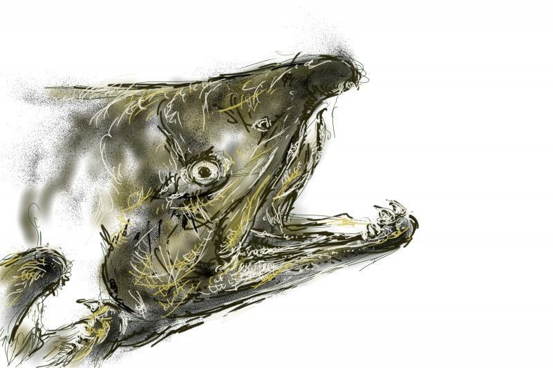 魚のイラストデータを販売いたします 魚好きのあなたにオススメです!