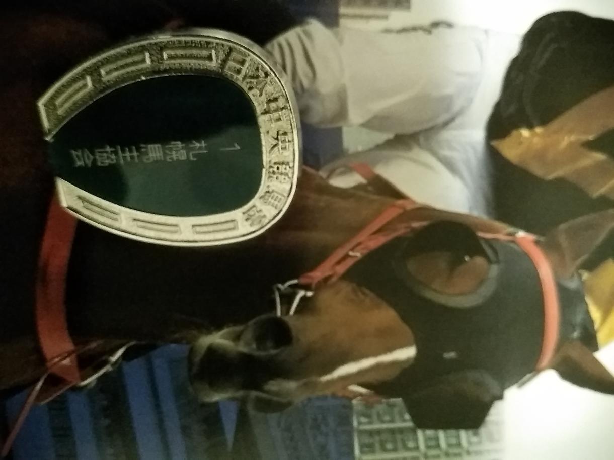 関係者情報で有馬記念で貴方を勝利を導きます 当たらなかった場合、代金返金致します