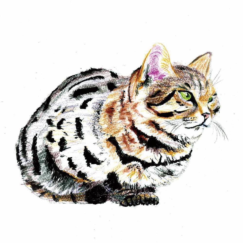 商用利用OK/動物やキャラクターのイラスト描きます 目的や用途に合わせたイラストを作成します。 イメージ1