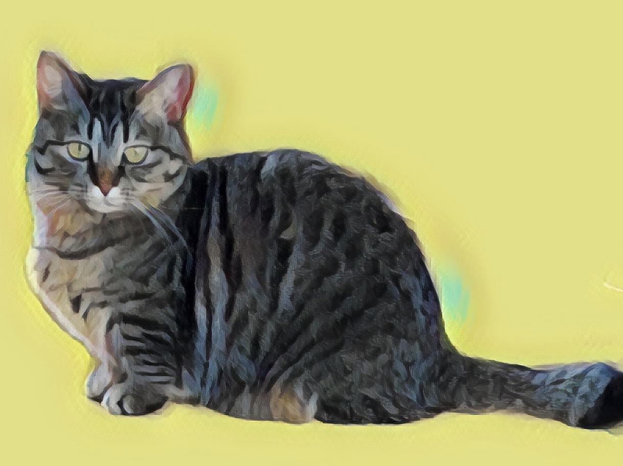 ペットのお写真(愛犬、愛猫)イラストにします 健在のペットは勿論、お亡くなりになったペットの遺影にも