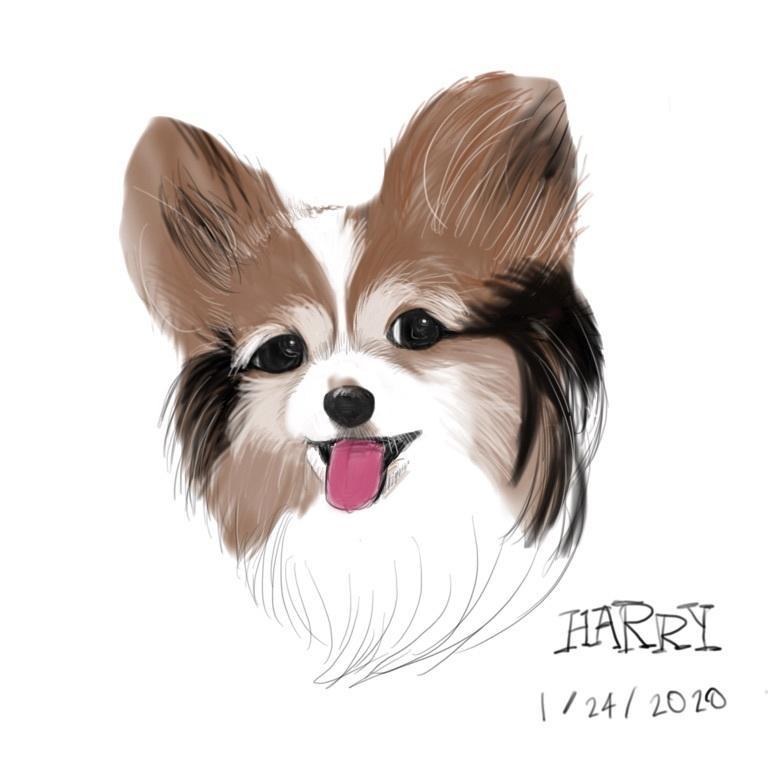 可愛い愛犬描きます 可愛く描きます。アイコン、ヘッダー、待ち受けに イメージ1