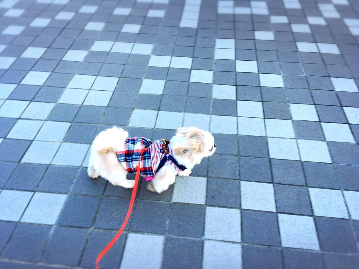 犬・猫・アニマル癒し系動画を作成します 動画にBGMやテキストを付けて編集動画を作らせていただきます