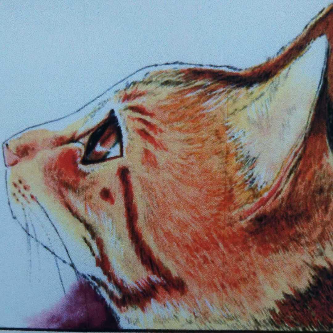 可愛いニャンコ描きます 手描きです、心をこめて仕上げます!