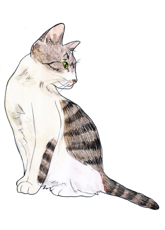 ペットのイラスト描きます あなたの大切な家族をイラストにしませんか?