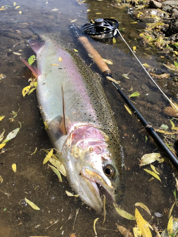 虹鱒 【釣り】 北海道の虹鱒をフライで狙う!ます ワイルドレインボー ハンティングメソッド