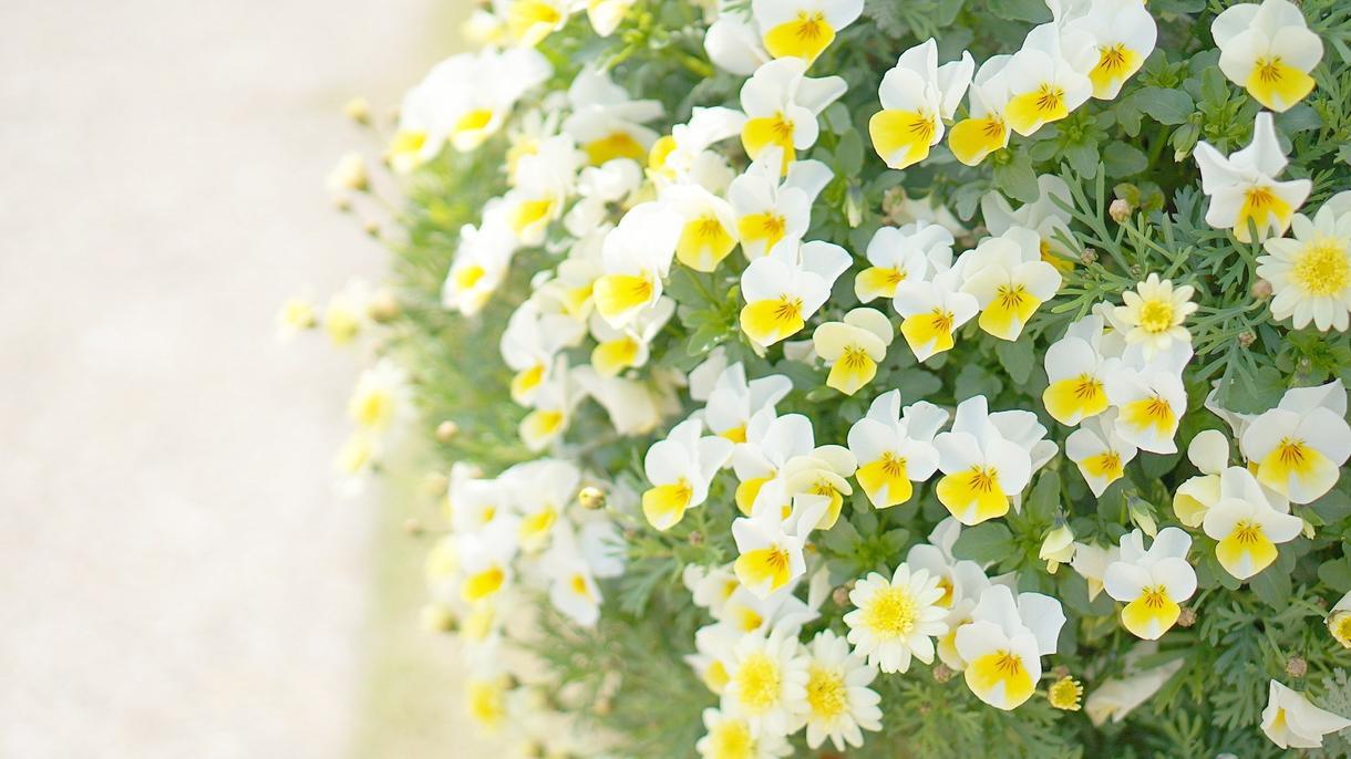 ブログ、SNS用のお花の写真を提供します お花の写真をプラスすることで見る人の心を癒します