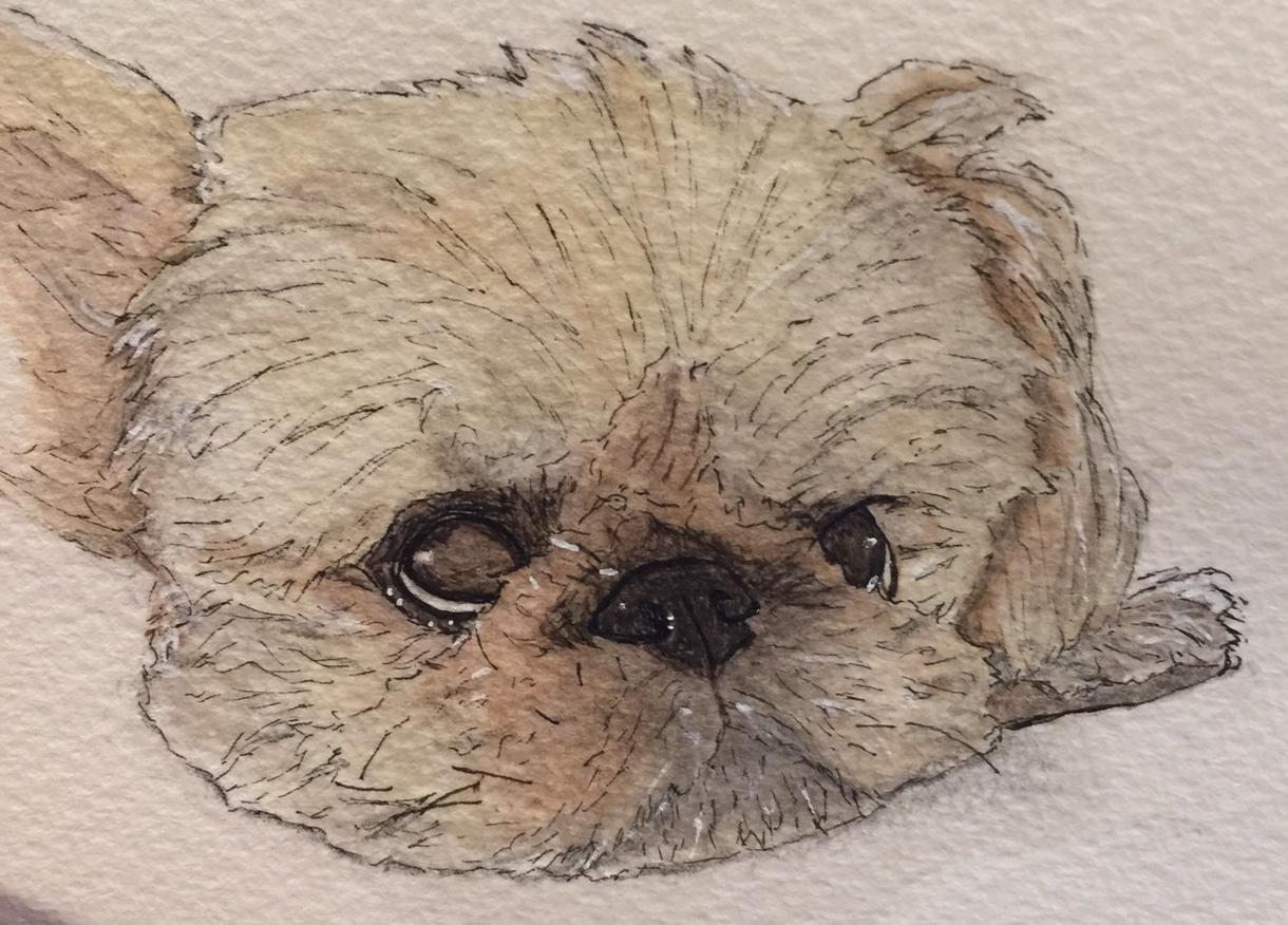 鼻ぺちゃ様のイラストを描きます パグ、フレンチブル、グリフォンなどの短頭種のイラスト
