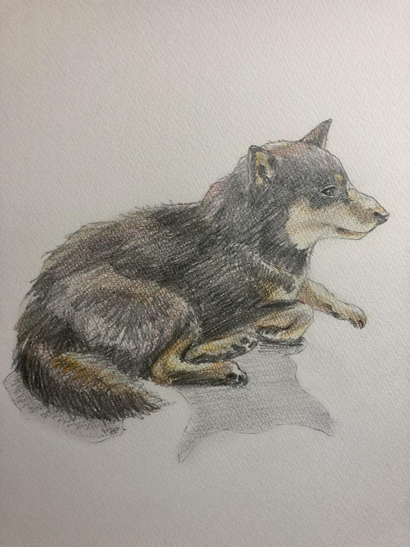 ペットの似顔絵〜写真を手書きで色鉛筆画に描きます 動物の表情、姿から雰囲気をじっくりと表現します