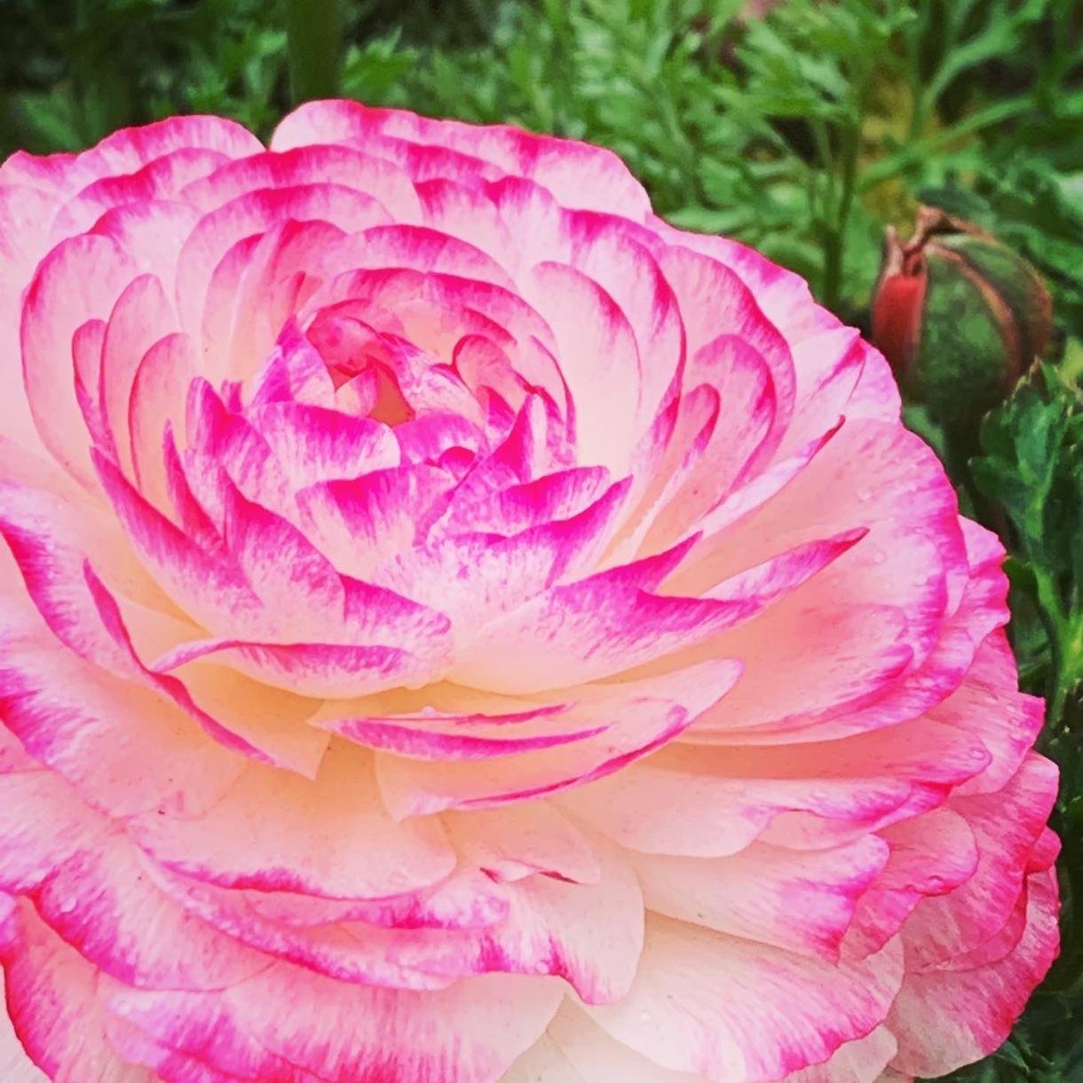 印象に残る季節の草花の写真を提供します 自然の色とりどりの草花で、より鮮やかな日常にします イメージ1