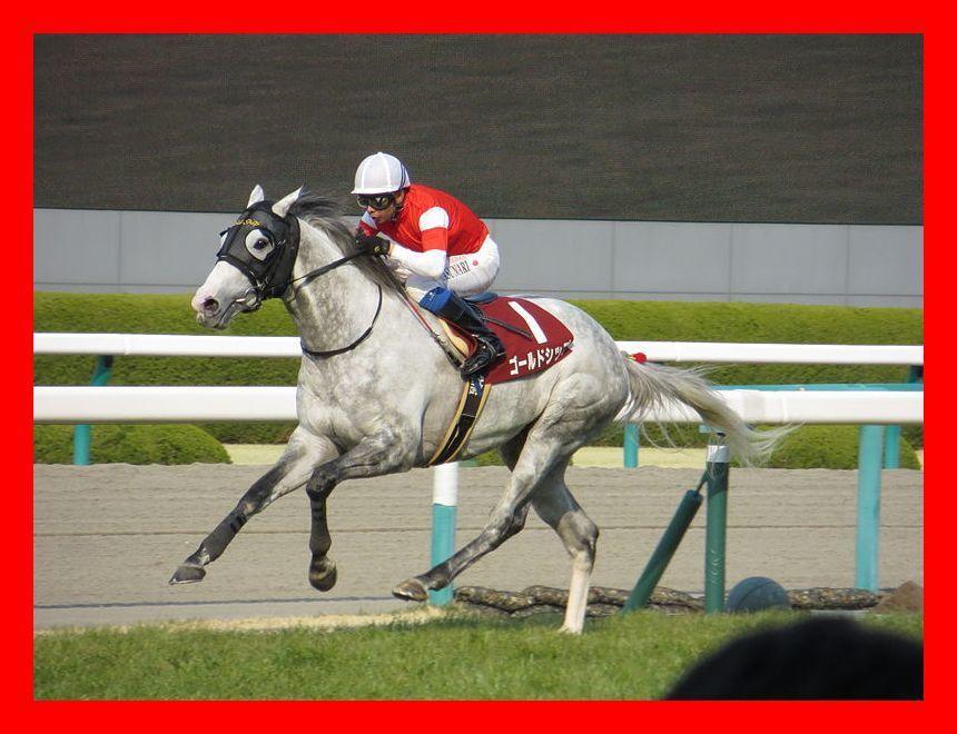 競馬の基本!馬券に絡む馬を教えます 競馬で勝つためには馬券対象となる馬を見つける事が重要です! イメージ1
