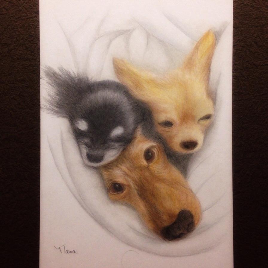 ペットの肖像画、似顔絵、イラストの描き方、教えます 色鉛筆でリアルなペットの肖像画を描きたい方!