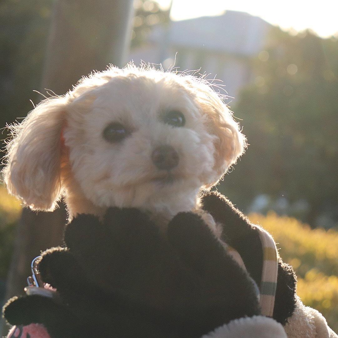 東海限定!記念に残るペットのお写真撮ります ペットさんのベストショットをお撮りします★