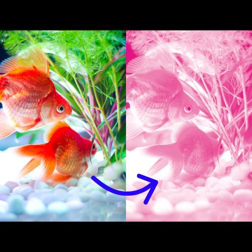 画像加工します jpgデータやphotoshopの画像データを1色変換します