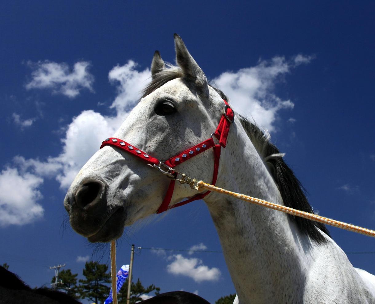 園田競馬の攻略法教えますます オッズと馬番を確認するだけで買うべき馬券が見つかる