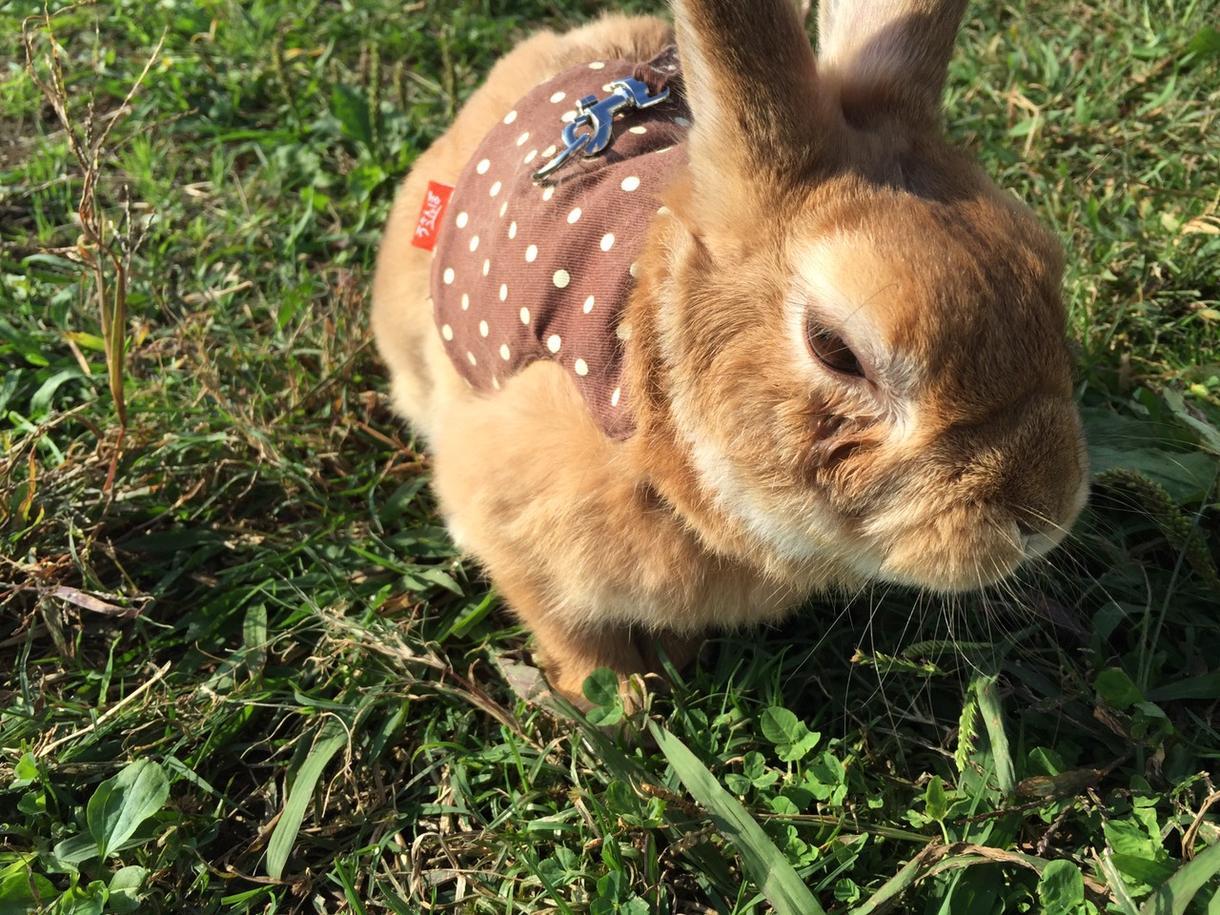 可愛いウサギの写真を送ります!