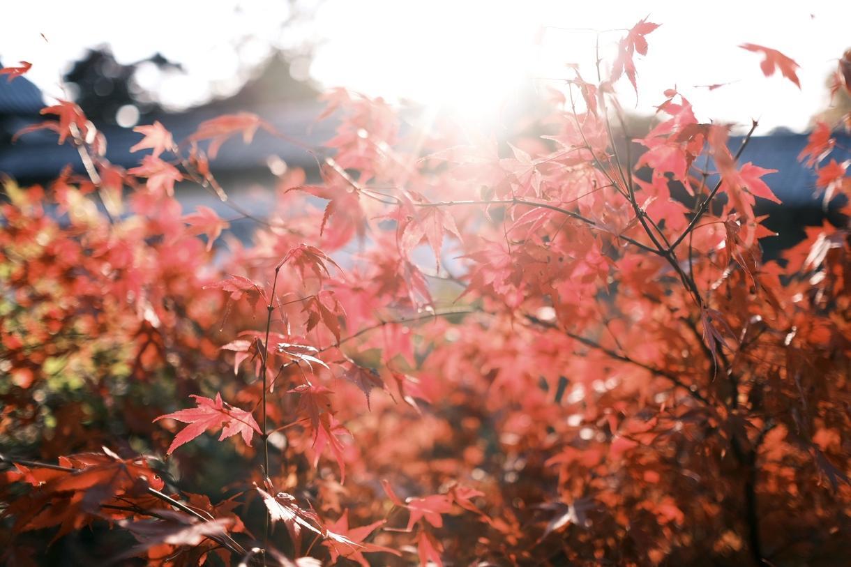 """京都での写真撮影を代行致します FUJIFILMのカメラで""""欲しい""""イメージを切り取ります! イメージ1"""