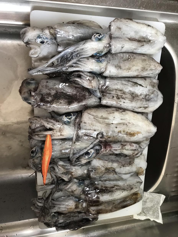 まず一杯アオリイカを釣るためのテクニック教えます 格安エギでも渋い日でもまず釣るためのテクニックです。