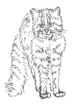 白黒イラスト・似顔絵、描きます。
