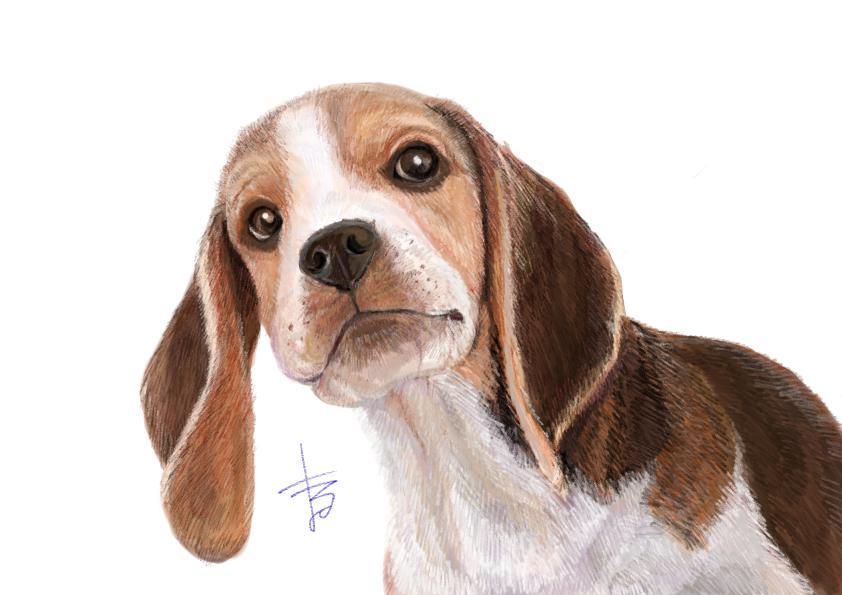 あなたのペットのイラストを描きます 世界に一つだけ! プレゼントや、思い出の一枚にどうぞ!
