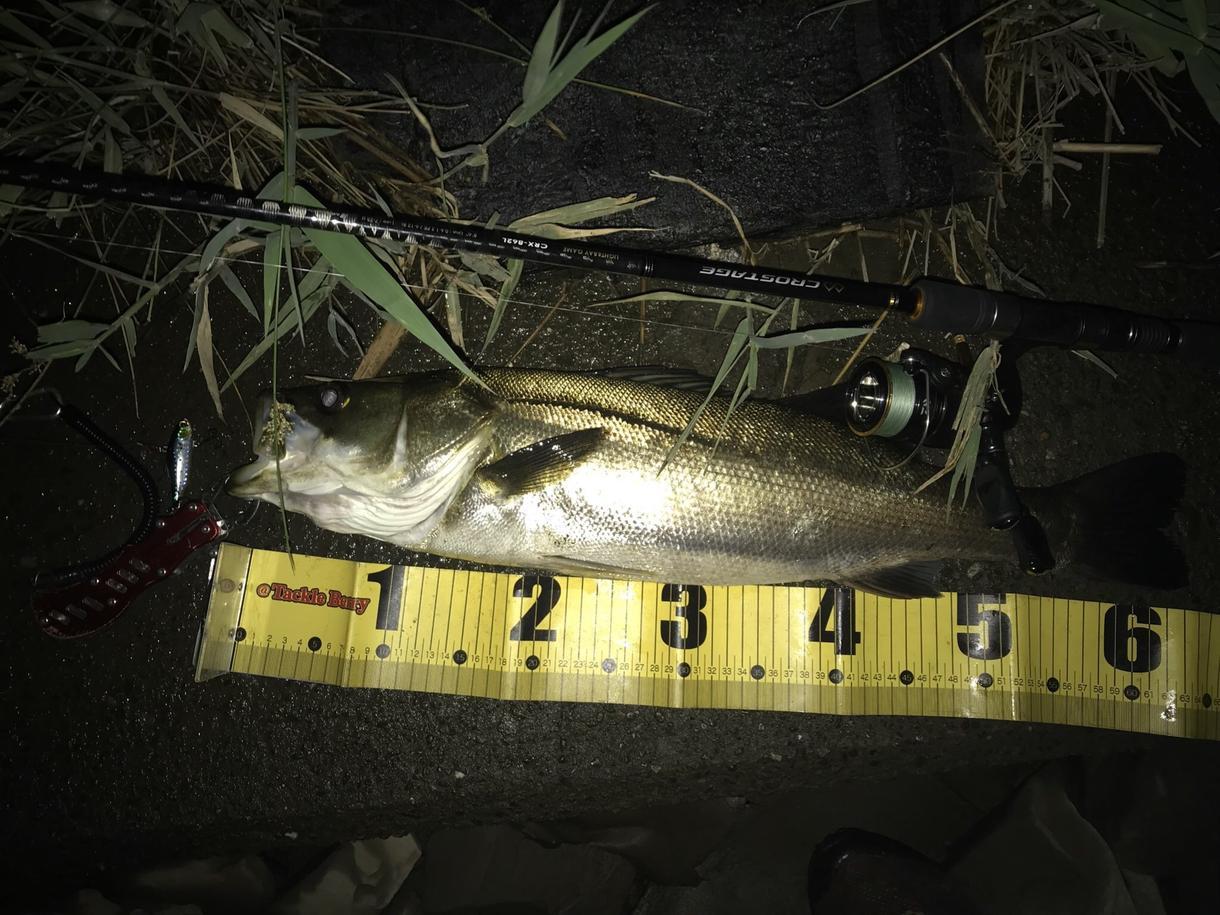 釣り場教えます 海釣り、川釣のポイント、各種魚類別