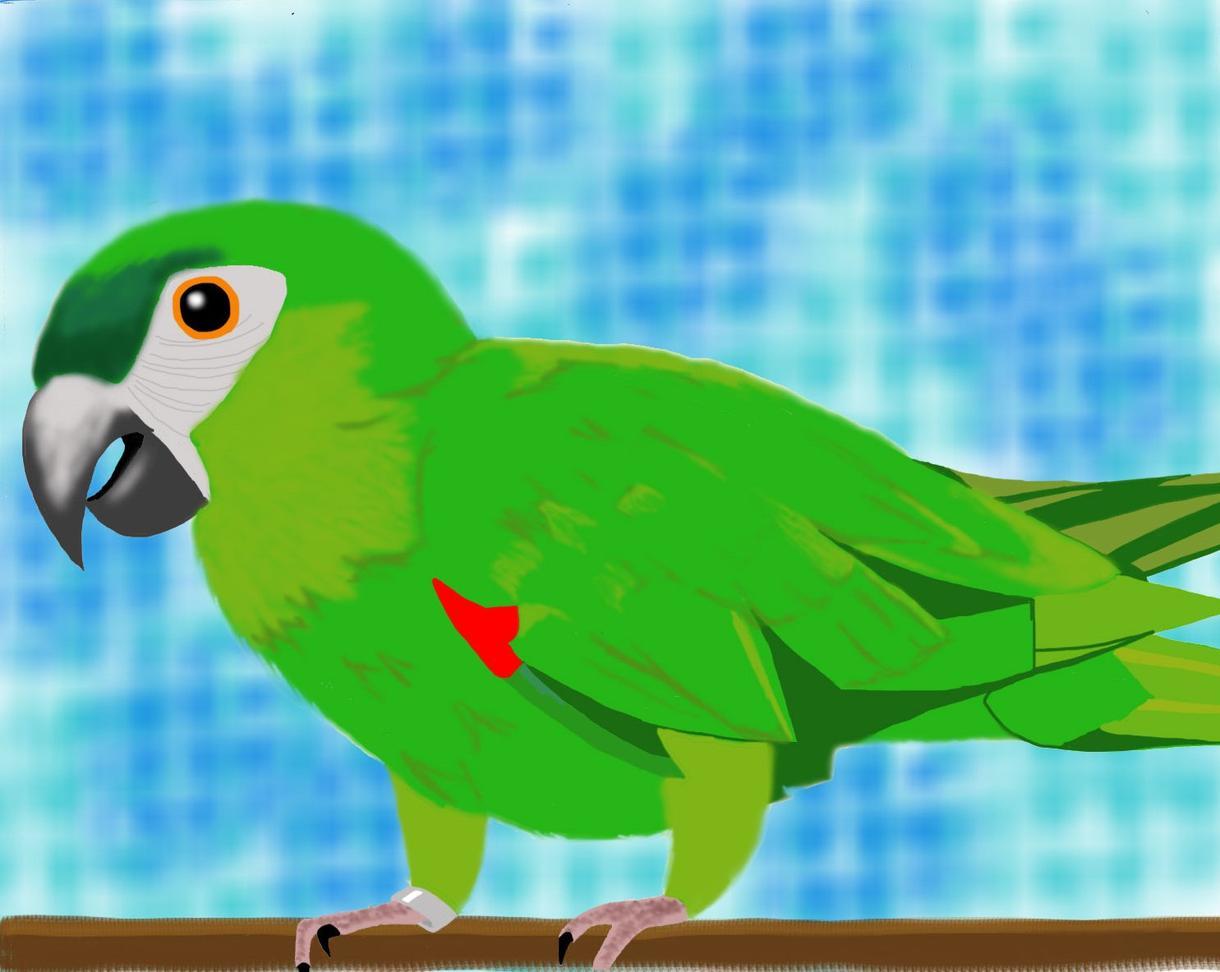 ペットや動物の写真を元にイラストを描きます ★ちょっとマイナーな動物好きな人も是非ご利用ください★