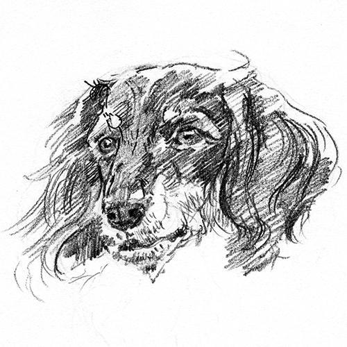 ペットの肖像画描きます(鉛筆画)