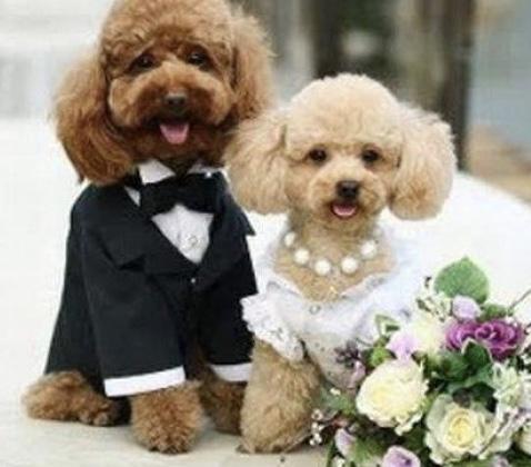 感動的なウェディングムービーを格安でお作り致します 【結婚式動画】新郎新婦の生い立ちムービーがなんと5000円!