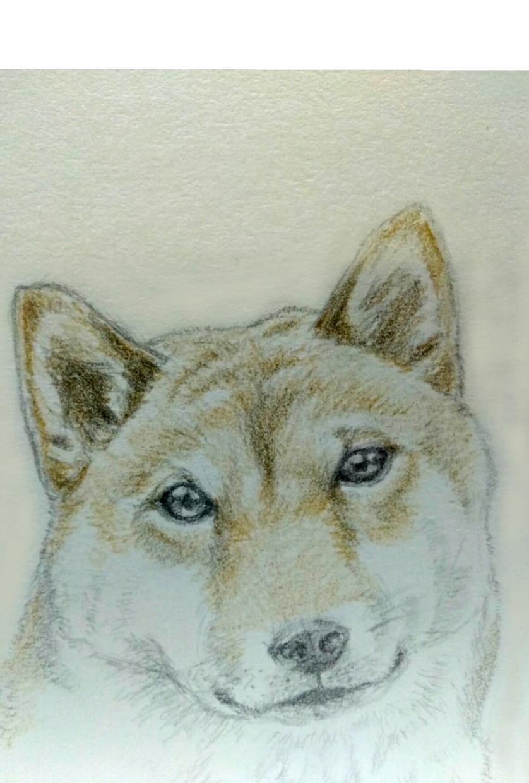 可愛いペットのイラスト描きます いつも可愛いがっているペットの記念に!