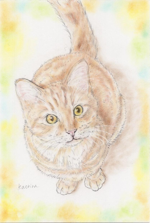 大切なペット様のイラストを描きます 飾りやすいハガキサイズ紙に、心を込めてお描きします! イメージ1